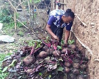 REALISE AMU veg gardening pic (2)